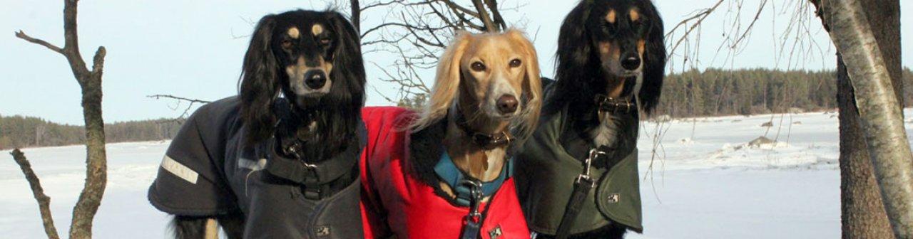 Sighthound Coats