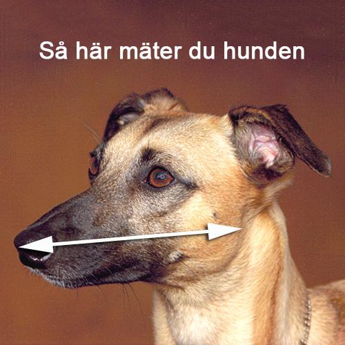 Greyhound munkorg - färgad nylon