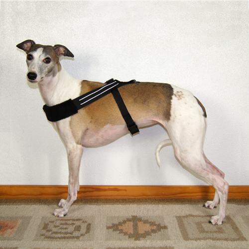 Sighthound Harness Reflective Basic XXL20